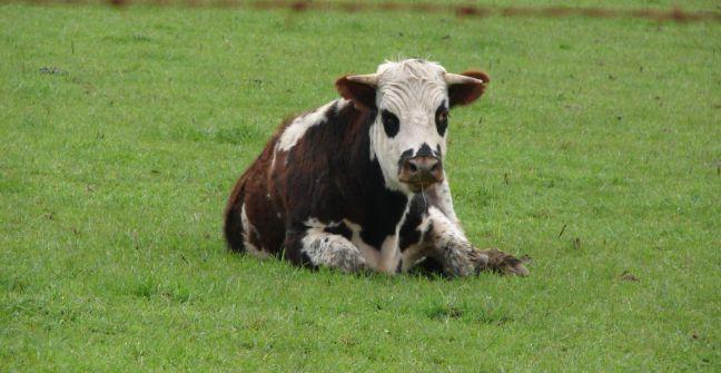 Sinergizando ganadería con agricultura
