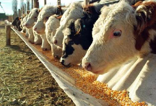 Asociatividad, rotación del suelo y exportación garantizan el futuro ganadero