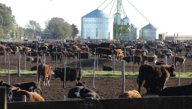 La ganadería que viene, más profesional y de ciclo completo