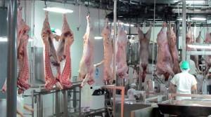 industria frigorifica ganado vacuno