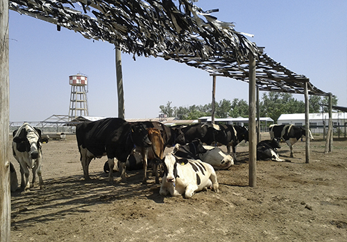 instalaciones rurales y ganaderas
