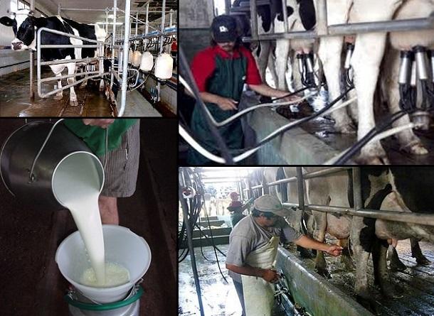 Gobierno prometió que no volverán retenciones a los lácteos