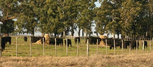 instalaciones ganaderas rurales