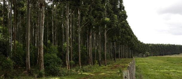 plantacion forestal en misiones