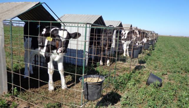 Se devaluó más el ingreso de los productores lecheros