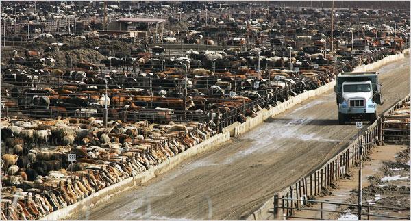 instalaciones ganaderas feedlot tambo manejo del ganado
