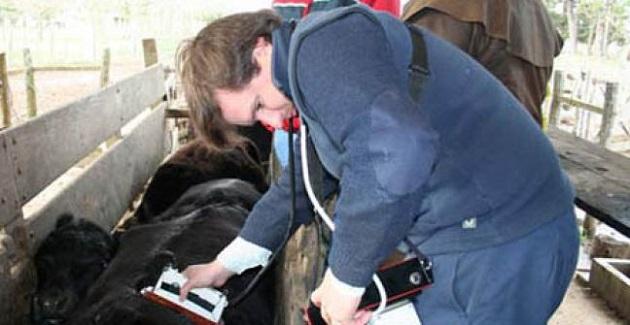 manejo de la hacienda vacuna veterinario