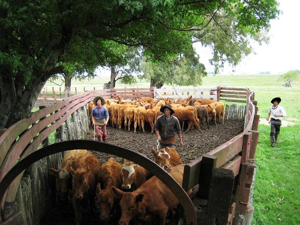 produccion de carne argentina