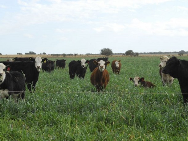 instalaciones rurales fabrica de articulos ganaderos