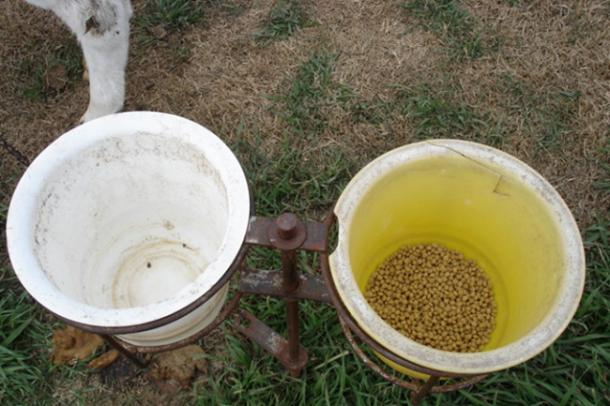 ganaderia lecheria - manejo del ganado vacuno formar al rumiante - imagen 1