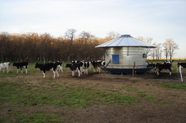 ganaderia lecheria - manejo del ganado vacuno formar al rumiante - imagen 4