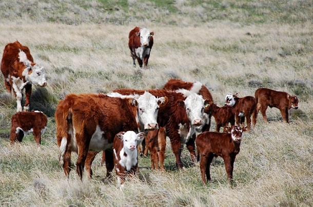 Mendoza: la tierra de la buena carne