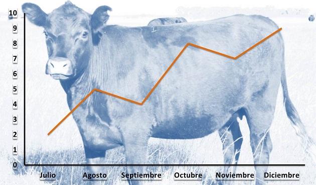 Información de existencias bovinas para 2015: Stock estabilizado con productividad en baja