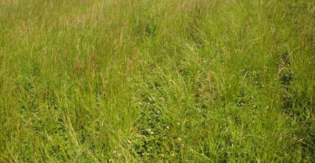 ganaderia - pasturas en ambientes dificiles
