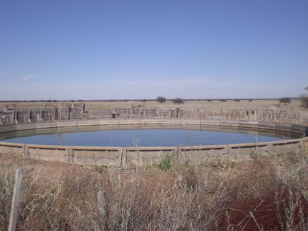 Efecto del consumo de agua de mala calidad en bovinos para carne