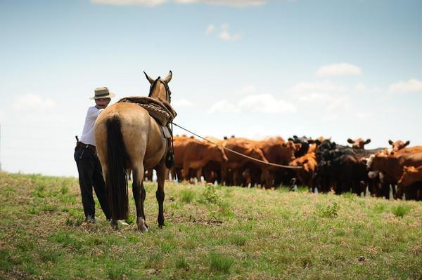Ganados y Carnes: El atroz encanto de administrar expectativas y prudencia.