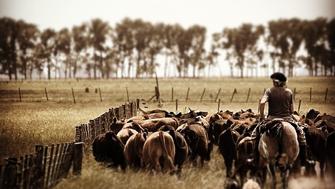 ganados y carnes - el atroz encanto de administras expectativas y prudencia