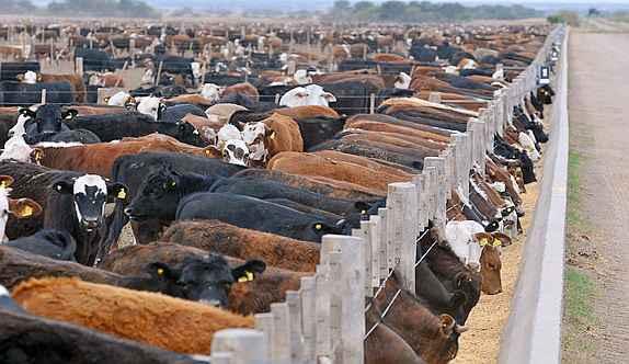 Haciendo foco en la ganadería intensiva